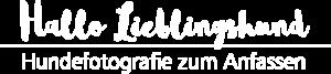 Hundefotograf Hund Shooting Lieblingshund Paderborn OWL NRW Europa