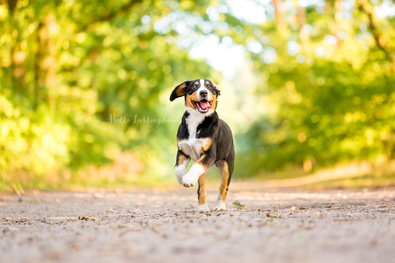 Outdoor Shooting - Shooting mit Hund draußen | Shooting im Wald mit Welpe