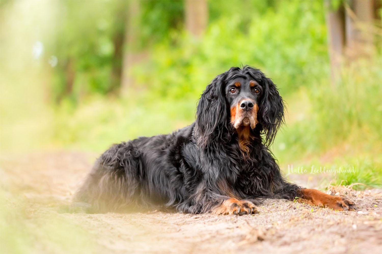 Outdoor Shooting - Shooting mit Hund draußen | Shooting im Wald Seniorenhund