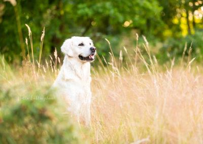 Outdoor Shooting - Shooting mit Hund draußen | Shooting in Feld und Wiese