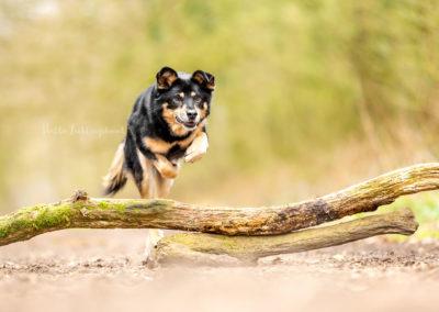 Outdoor Shooting - Shooting mit Hund draußen | Action Shooting im Wald