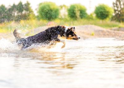 Outdoor Shooting - Shooting mit Hund draußen | Shooting im Wasser