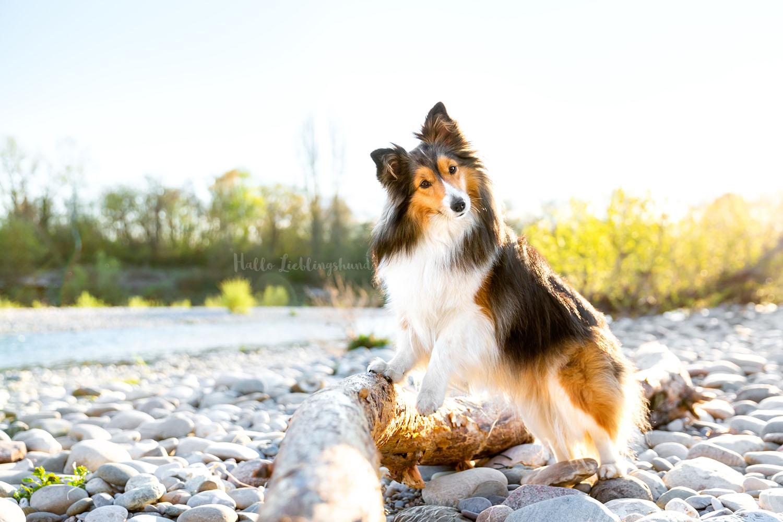 Outdoor Shooting - Shooting mit Hund draußen | Shooting am Rhein am Fluss