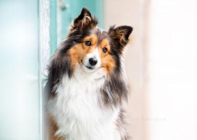 Outdoor Shooting - Shooting mit Hund draußen | Stadtshooting in der Schweiz Lieblingsabenteuer
