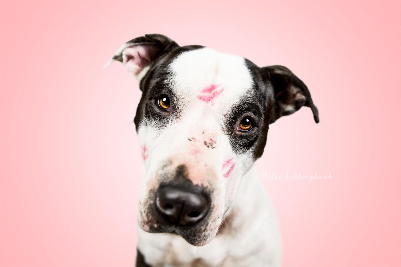 Lustige Hundeportraits - Studioshooting mit Hund | Shooting im Studio Indoor