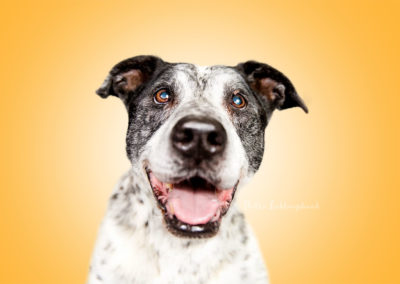 Speedy - Mix | Hallo Lieblingshund - Hundefotografie zum Anfassen