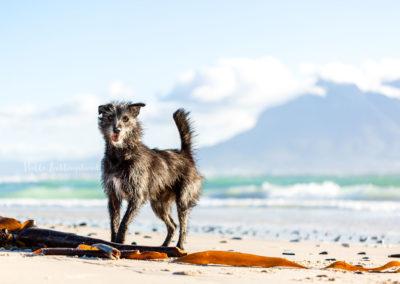 Outdoor Shooting - Shooting mit Hund draußen | Lieblingsabenteuer Shootingabenteuer in Kapstadt