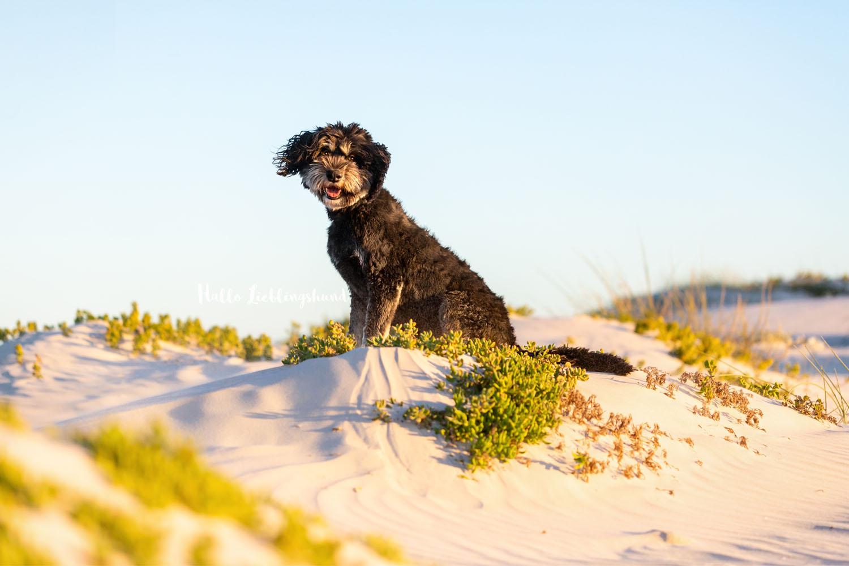 Outdoor Shooting - Shooting mit Hund draußen | Lieblingsabenteuer in Kapstadt