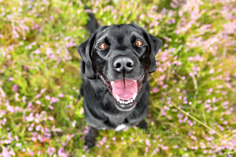 Outdoor Shooting - Shooting mit Hund draußen | Shooting in der Heide