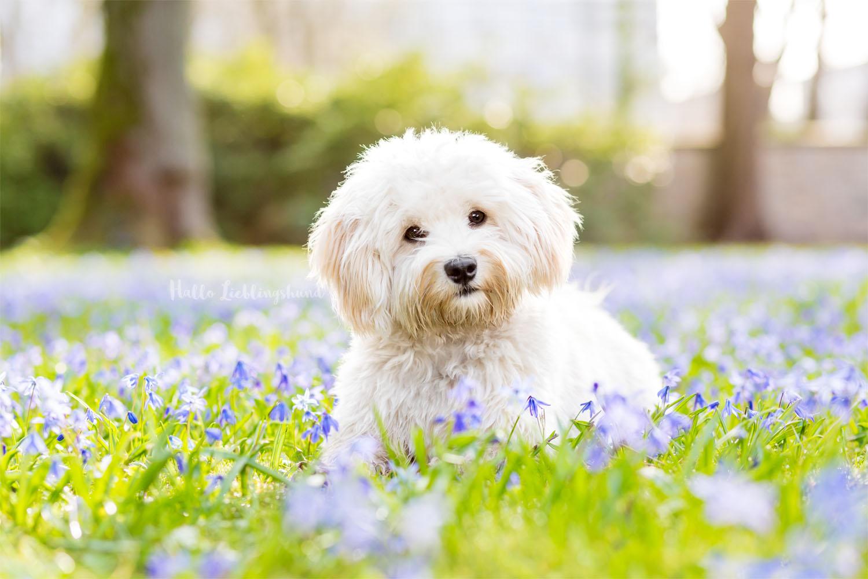 Outdoor Shooting - Shooting mit Hund draußen | Shooting im Frühling