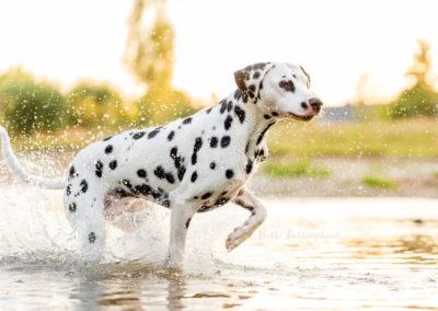 Outdoor Shooting - Shooting mit Hund draußen | Shooting im Fluss