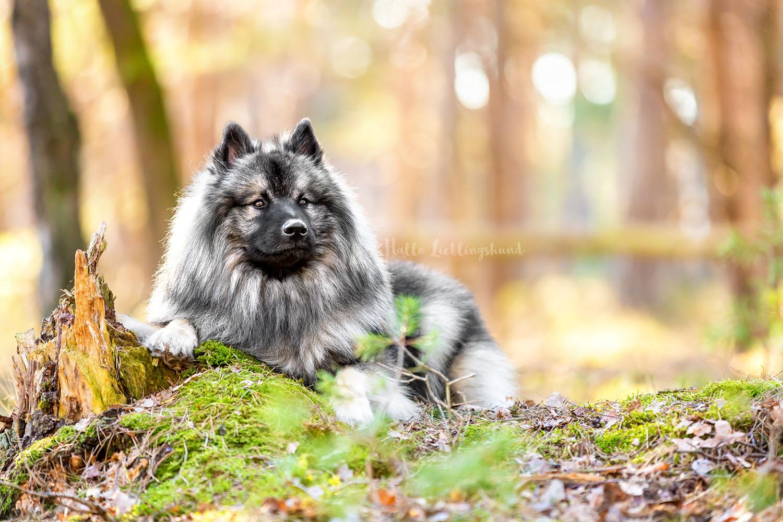 Outdoor Shooting - Shooting mit Hund draußen | Shooting im Wald