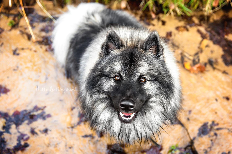 Outdoor Shooting - Shooting mit Hund draußen | Shooting im Bach und in der Quelle