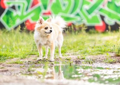 Outdoor Shooting - Shooting mit Hund draußen | Urbanes Shooting vor Graffiti Wand