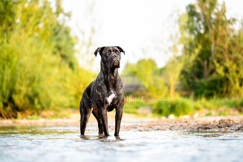 Outdoor Shooting - Shooting mit Hund draußen | Shooting im Bach und im Wasser