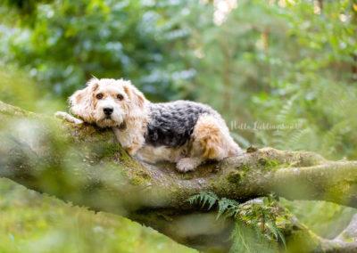 Outdoor Shooting - Shooting mit Hund draußen | Shooting in der Natur