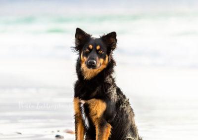 Outdoor Shooting - Shooting mit Hund draußen | Lieblingsabenteuer am Strand und Merr von Kapstadt