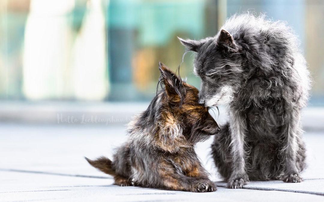 Charity-November – Tierschutzspenden-Aktion
