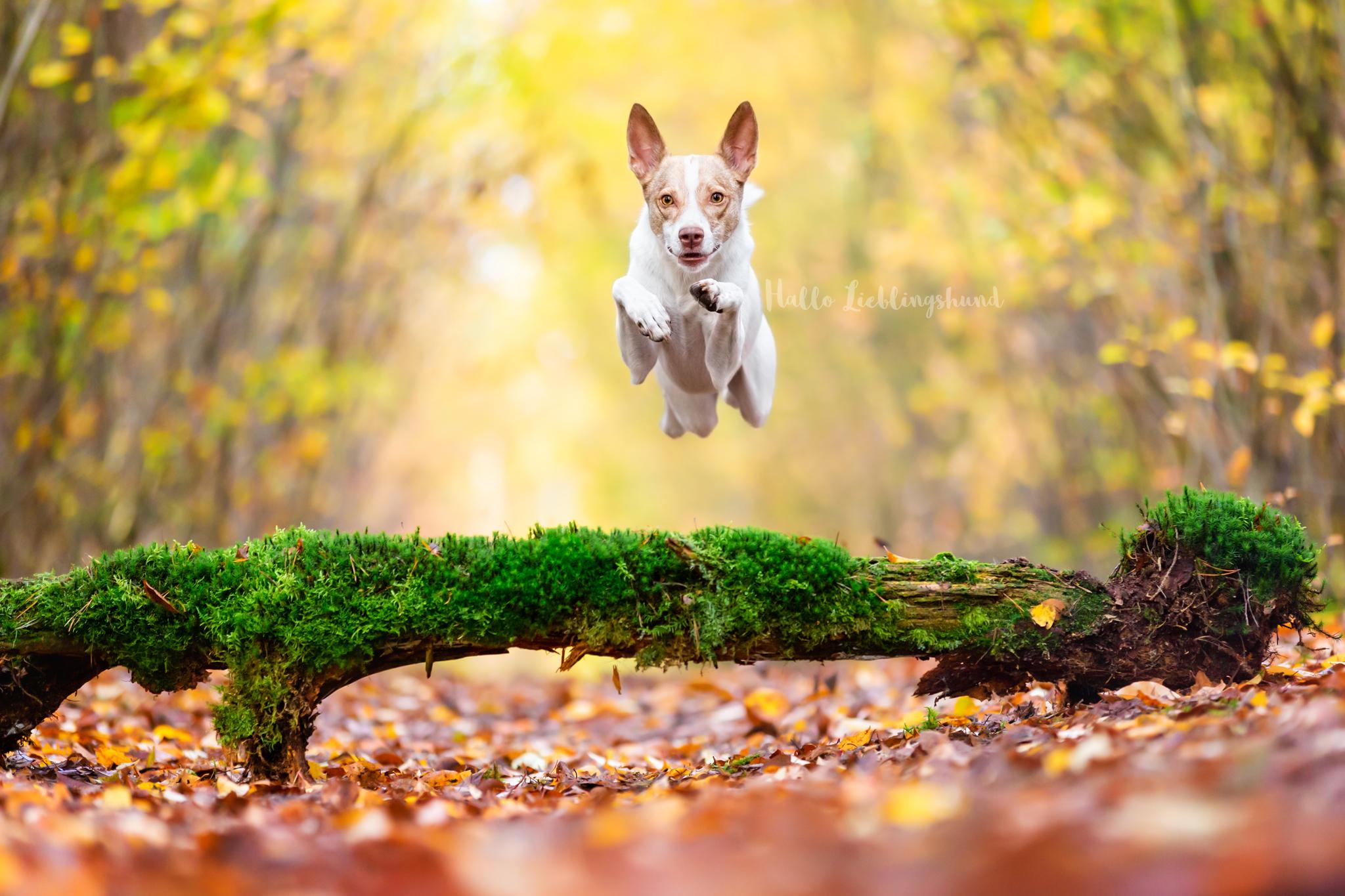 Outdoor Shooting - Shooting mit Hund draußen | Action im Wald