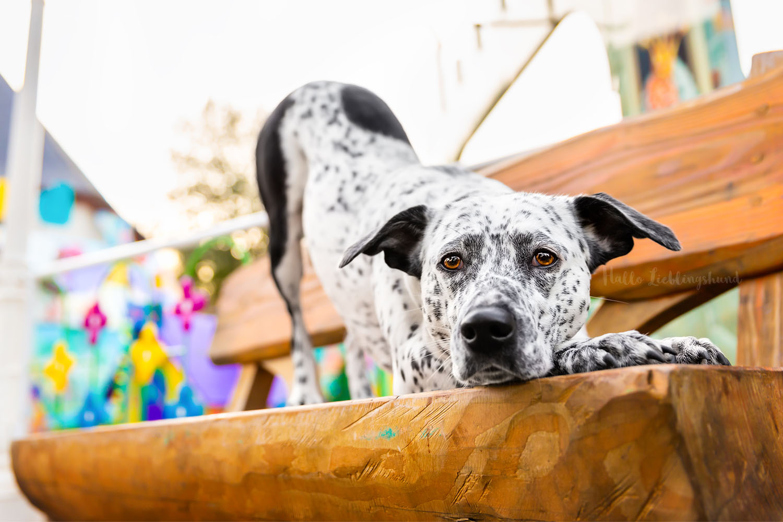 Hund bearbeiten | Fehlfokus in Lightroom erkennen