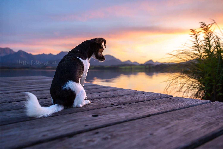 Hund auf einem Steg zum Sonnenuntergang