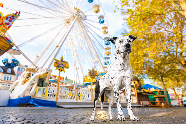 Monatsfoto im Outdoor Hundekalender | Oktober 2021
