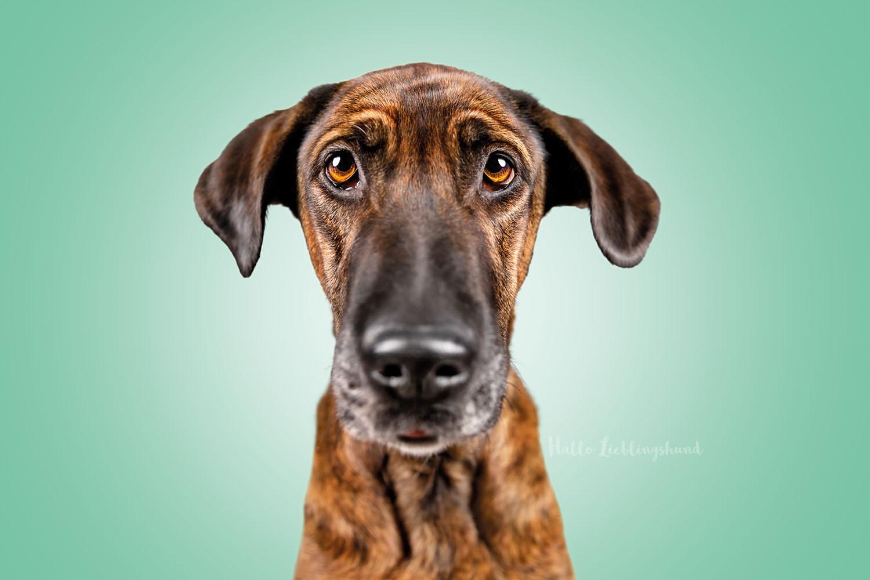 Monatsfoto im Studio Hundekalender Lustige Hundeportraits | Juli 2021