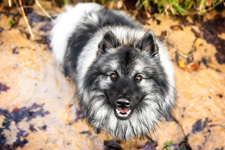 Monatsfoto im Outdoor Hundekalender | April 2021
