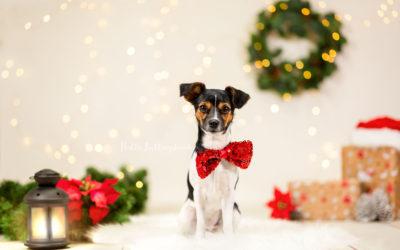 Geschenkideen für Hundehalter