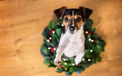 Ideen für Weihnachtsfotos mit deinem Hund