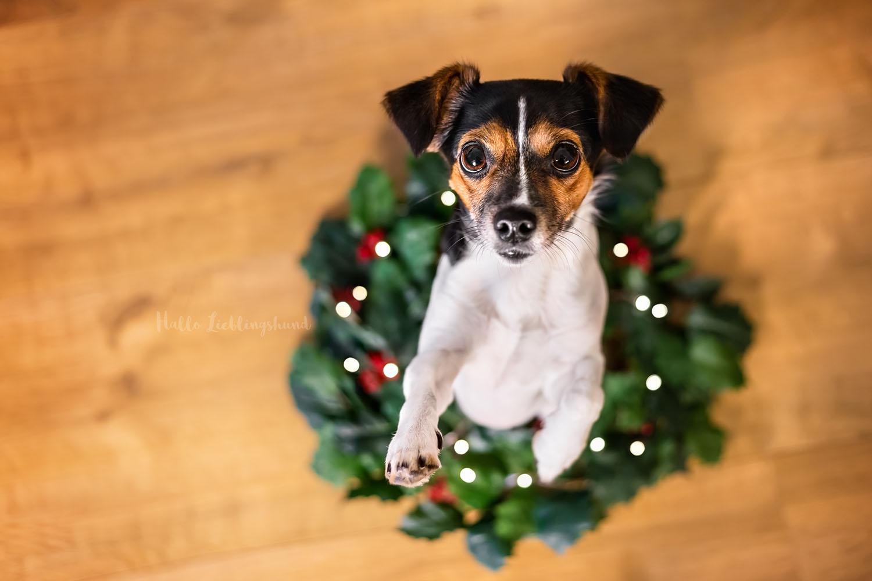 DIY - Idee für Weihnachtsfotos mit Hund   Ergebnis