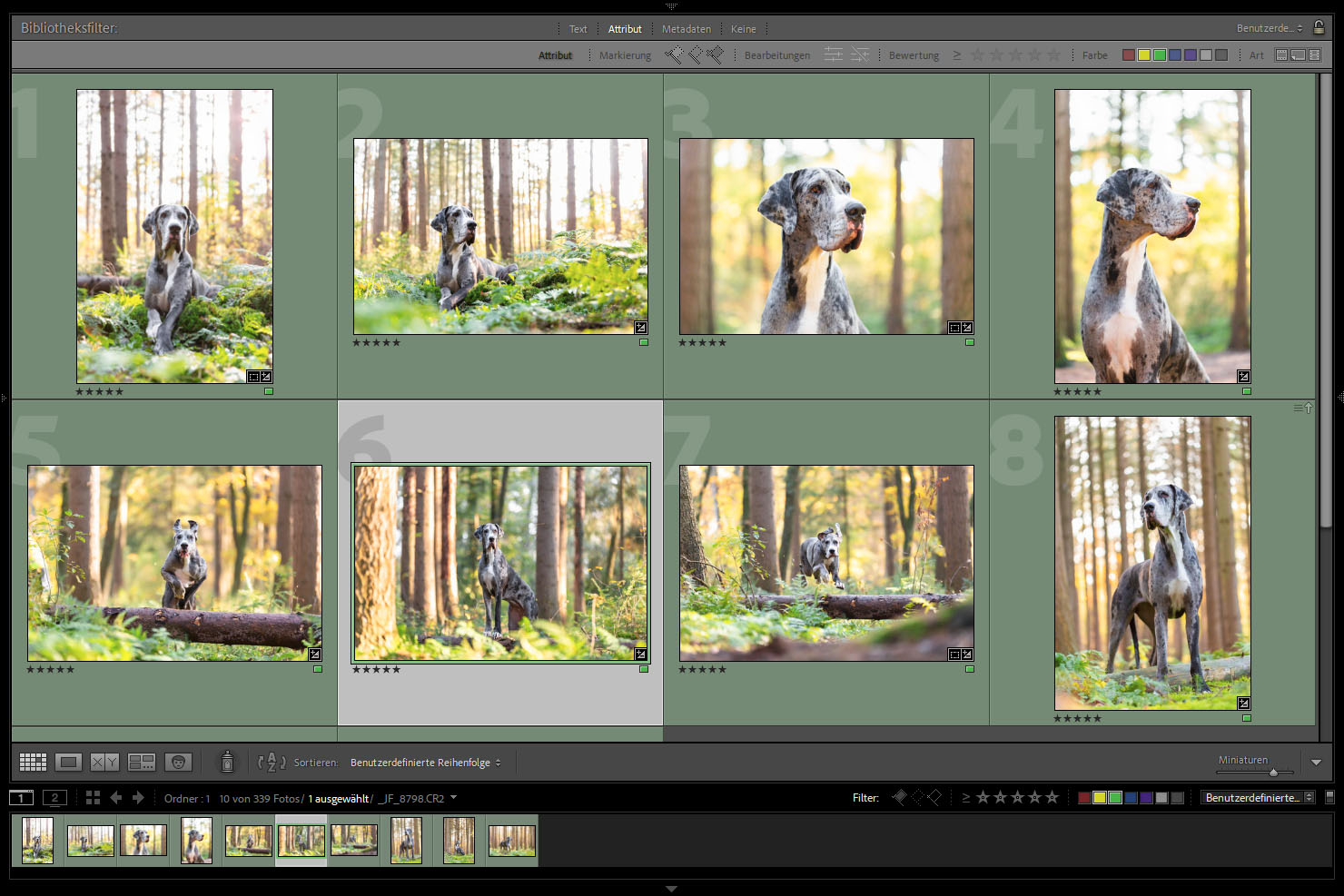 Outdoor Shooting - Shooting mit Hund draußen   Shooting in der Heide