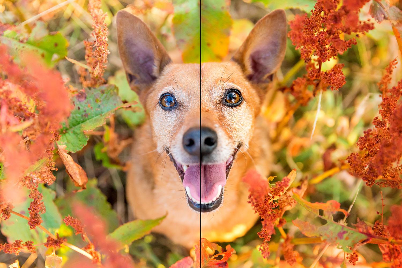 Monatsfoto im Outdoor Hundekalender   Oktober 2021