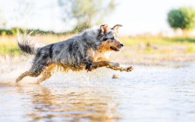 Wenn die Hundefotografin baden geht